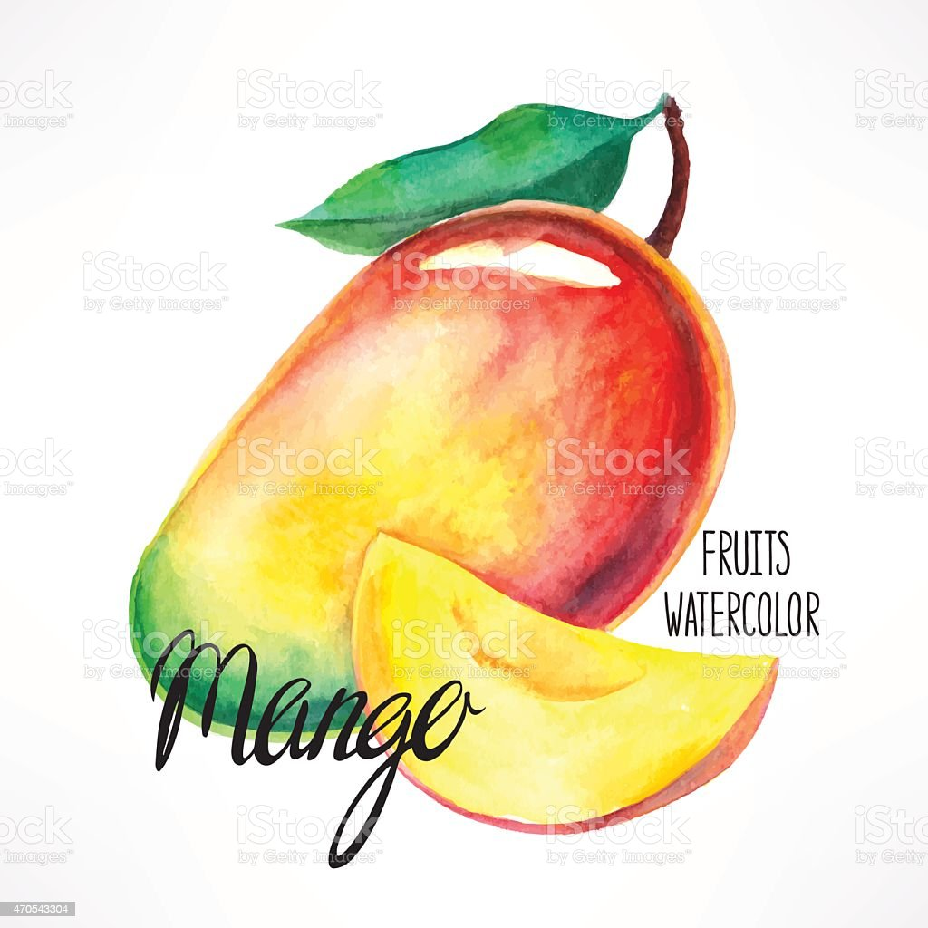 watercolor mango vector art illustration