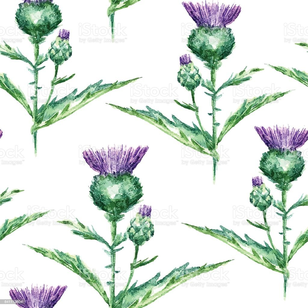 Watercolor milk thistle herb. seamless pattern vector art illustration