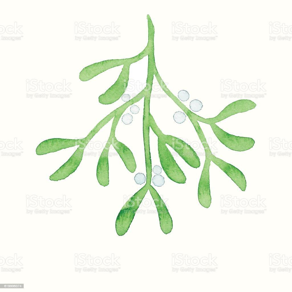 Watercolor Mistletoe vector art illustration