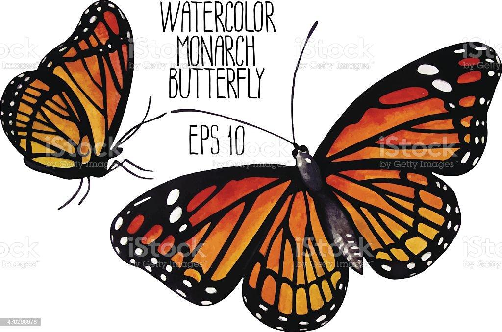 Watercolor monarch butterflies vector art illustration