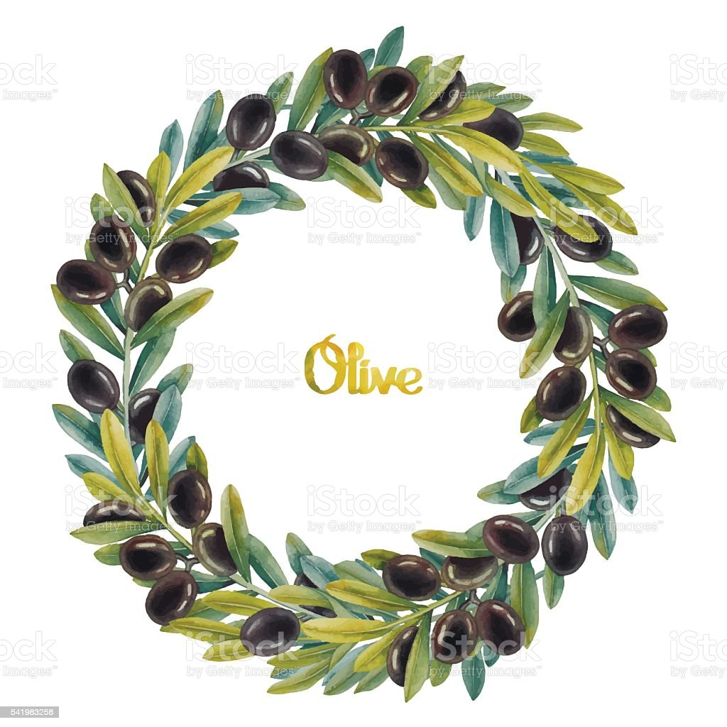 Watercolor olive wreath vector art illustration