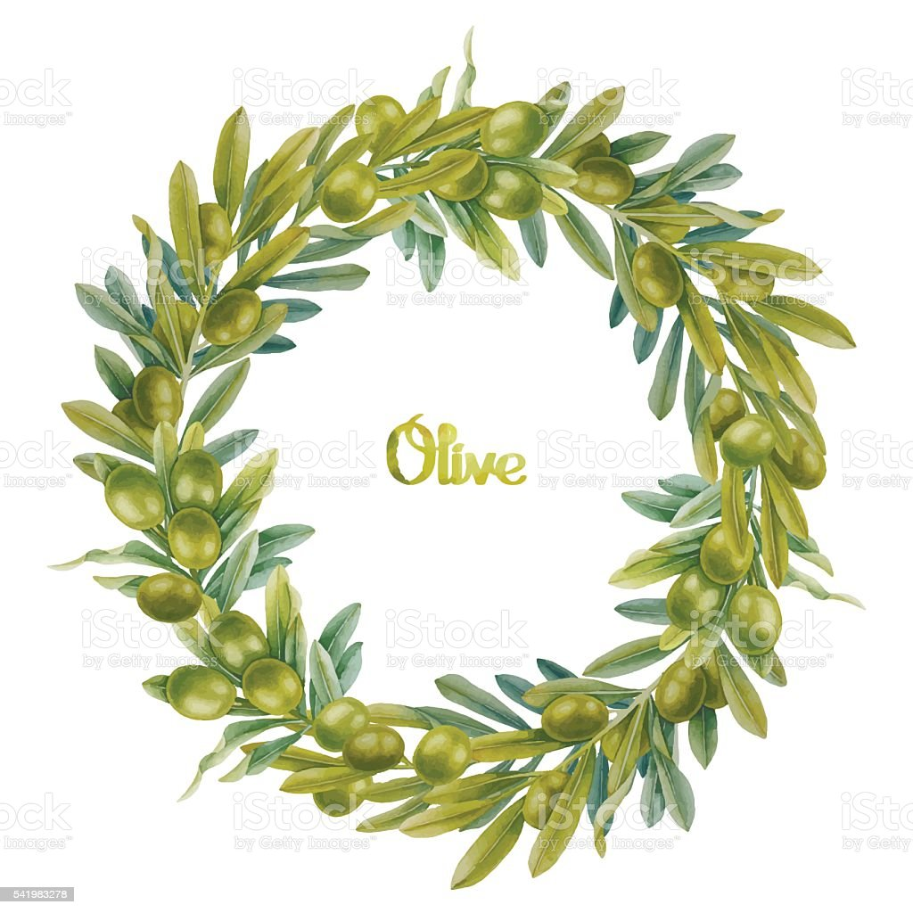Watercolor olive wreath vector art illustration