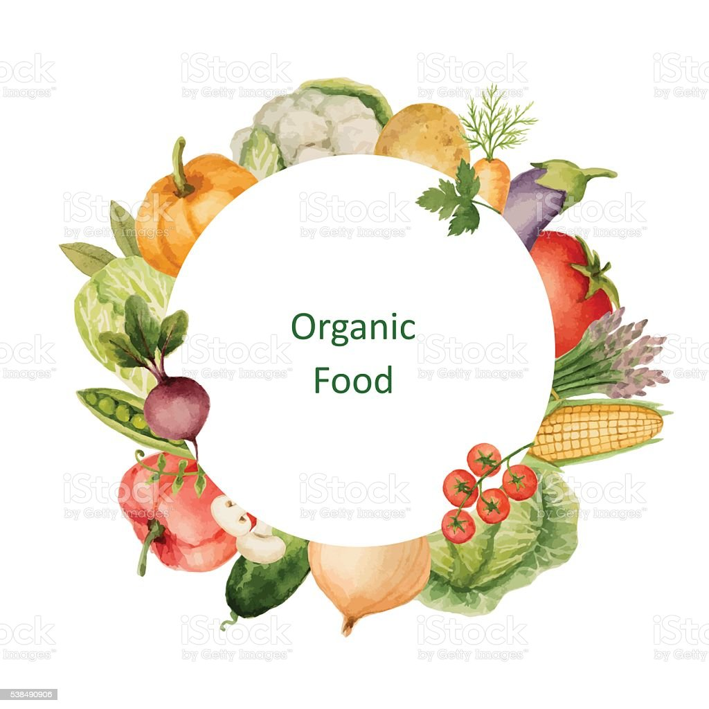 Watercolor painted organic vegetables. vector art illustration