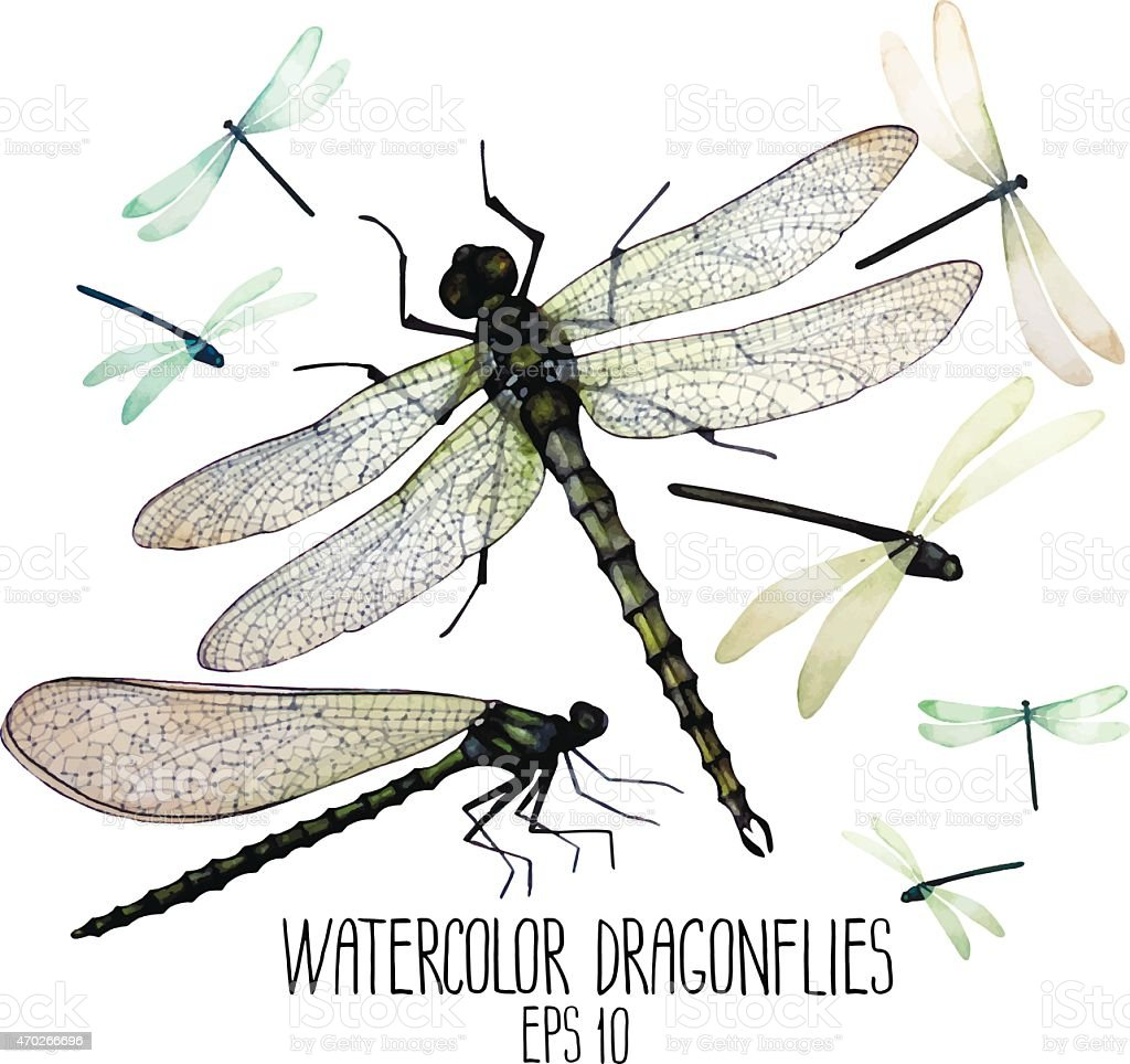 Watercolor painting of dragonflies vector art illustration
