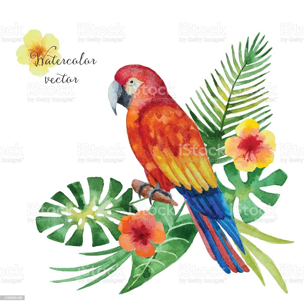 Watercolor parrot, flowers and leaves vector art illustration