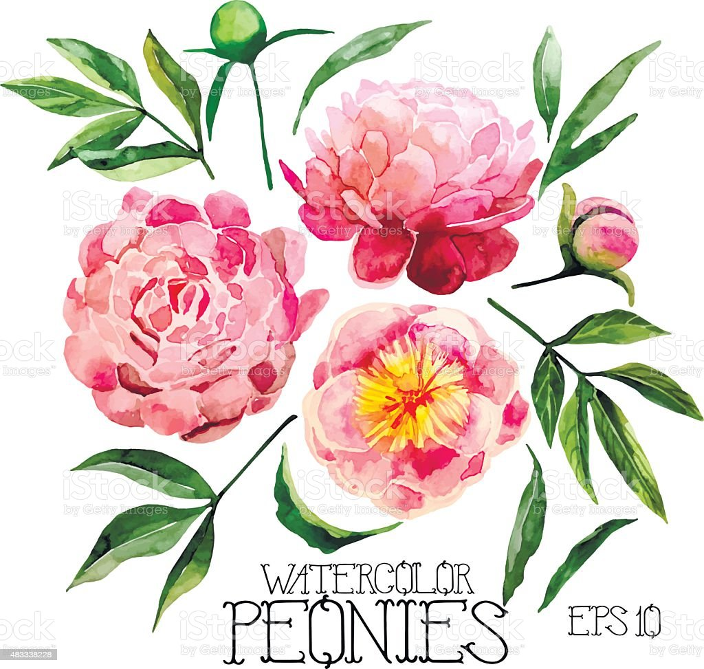 Watercolor peonies set vector art illustration