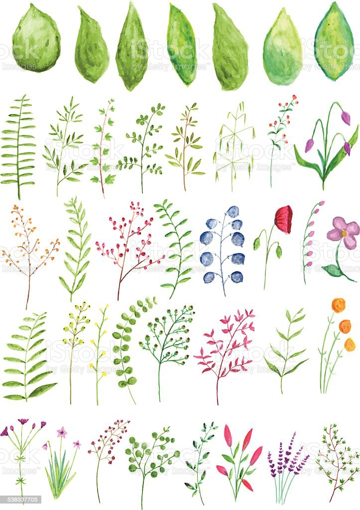 Watercolor Plants and Branches vector art illustration