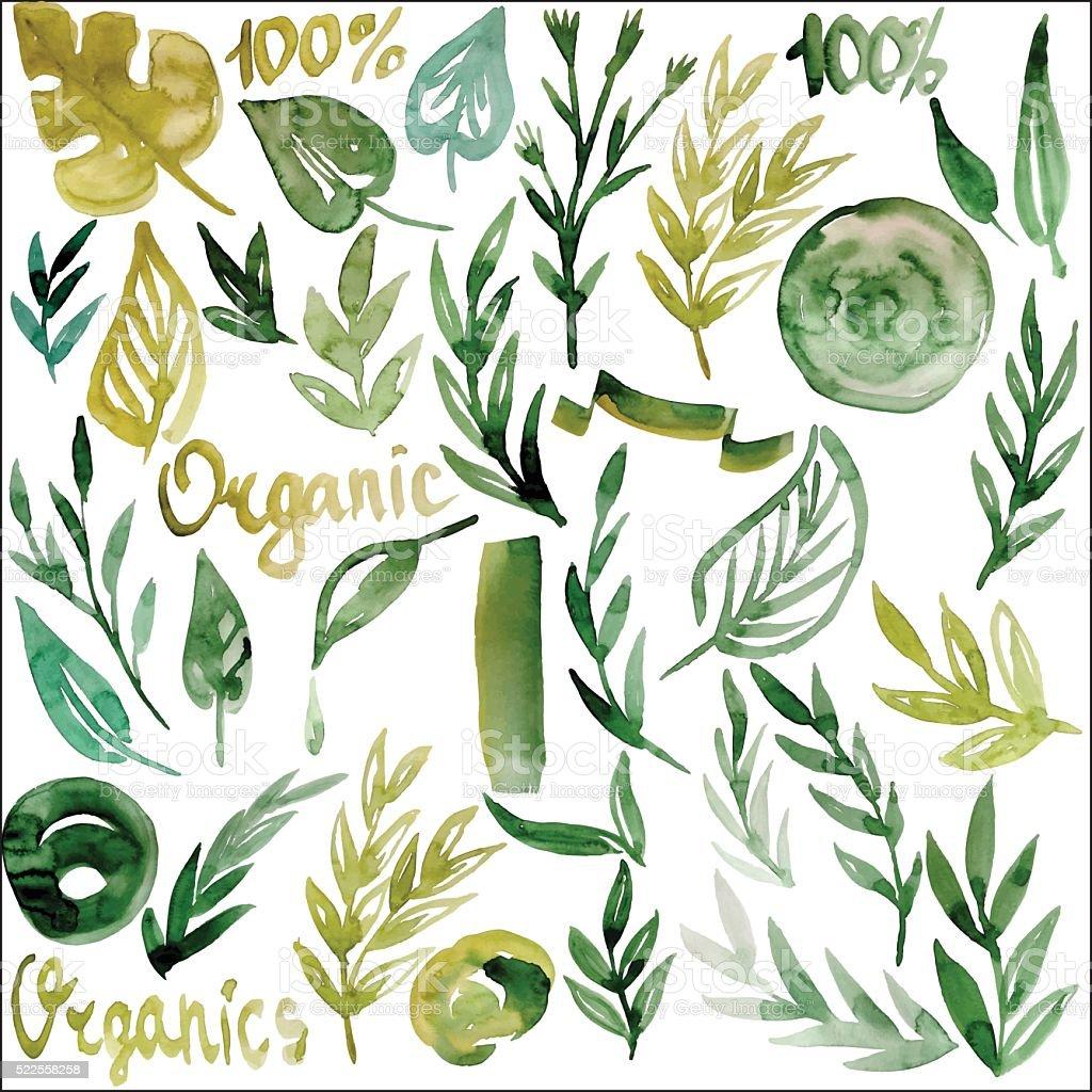 watercolor plants, organic, vector vector art illustration