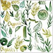 watercolor plants, organic, vector