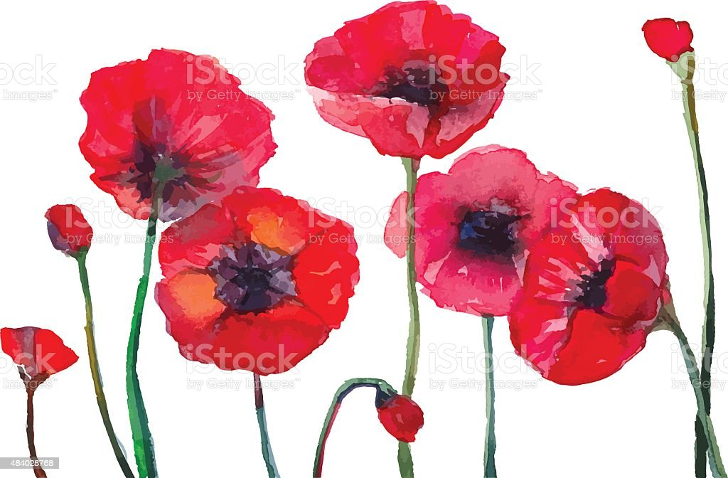 Watercolor poppies. vector art illustration