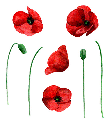 Poppy Clip Art, Vector Images & Illustrations - iStock