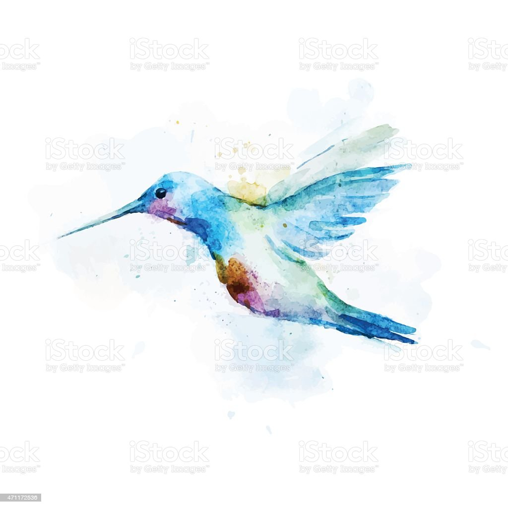 Watercolor portrait of a Colibri Bird on a white background vector art illustration