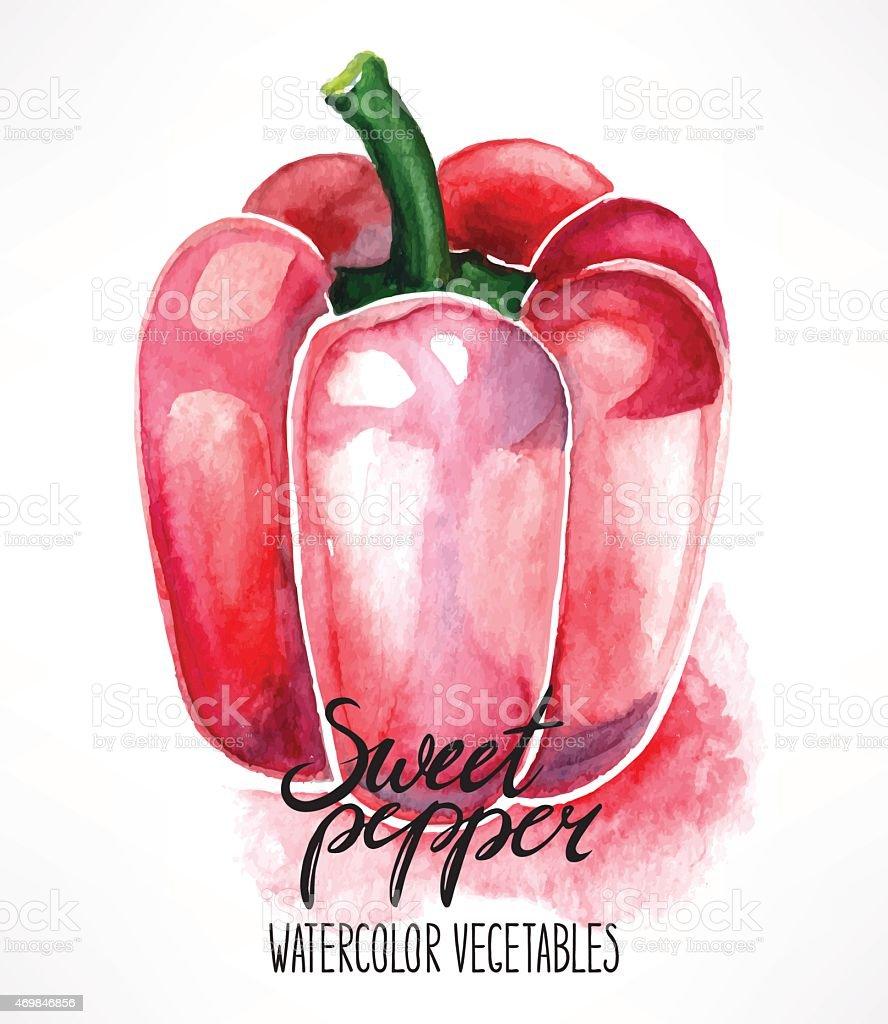 watercolor red bell pepper vector art illustration