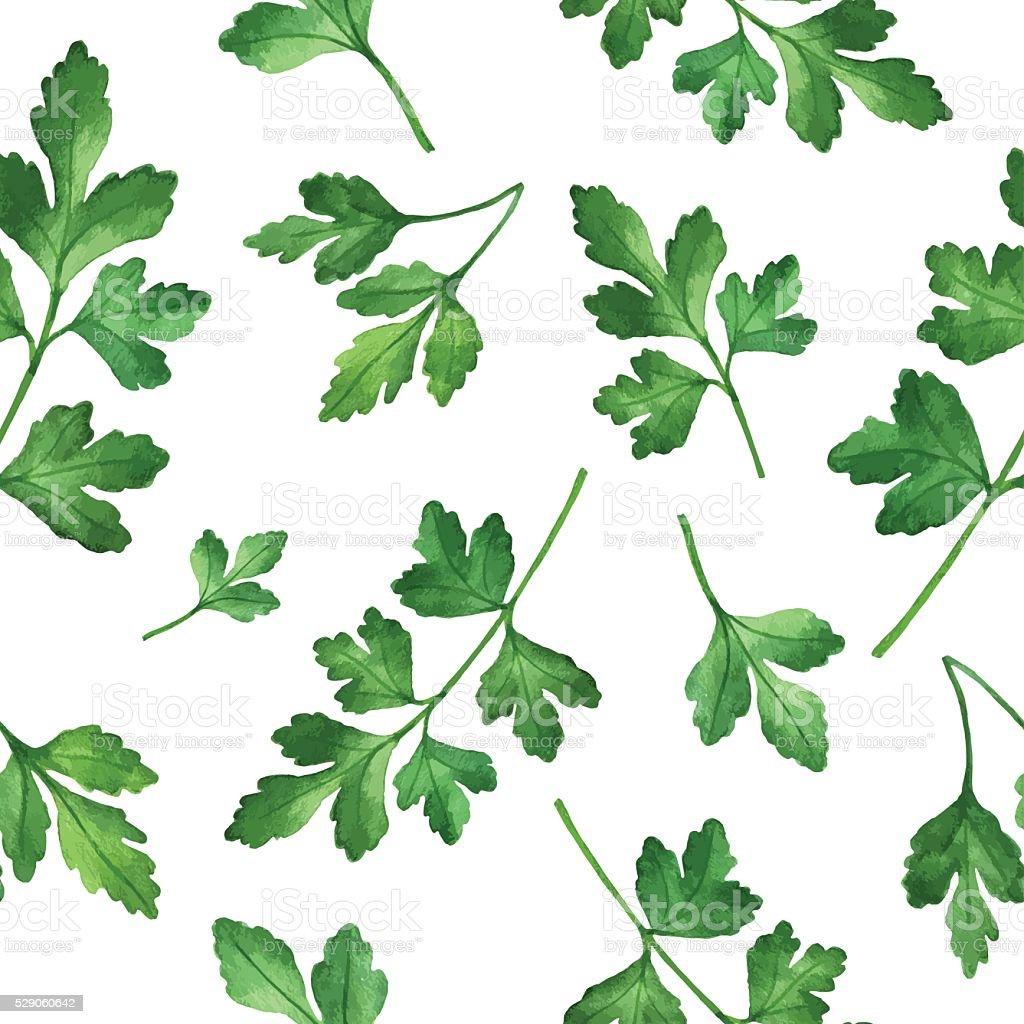 Watercolor seamless pattern hand drawn herb parsley . vector art illustration