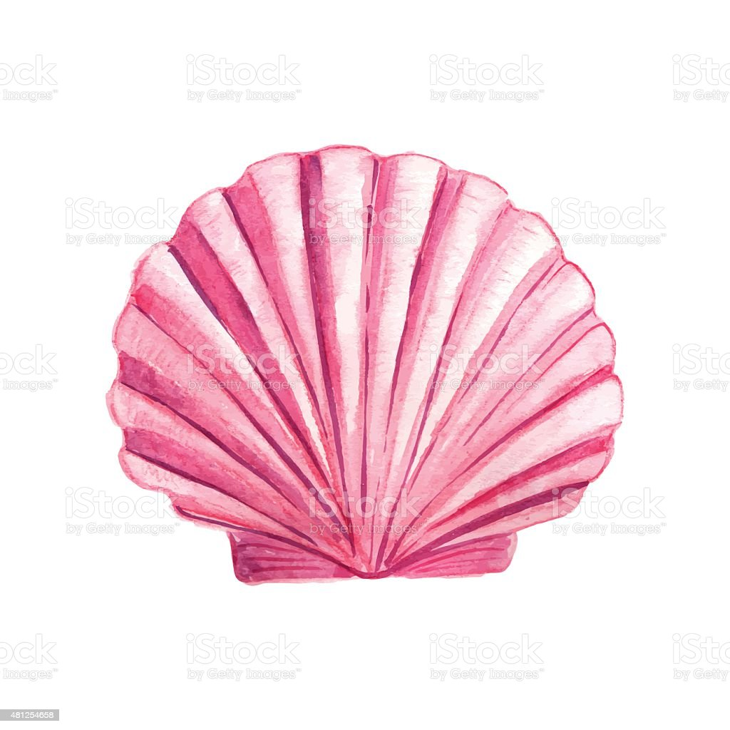 Watercolor Seashell vector art illustration