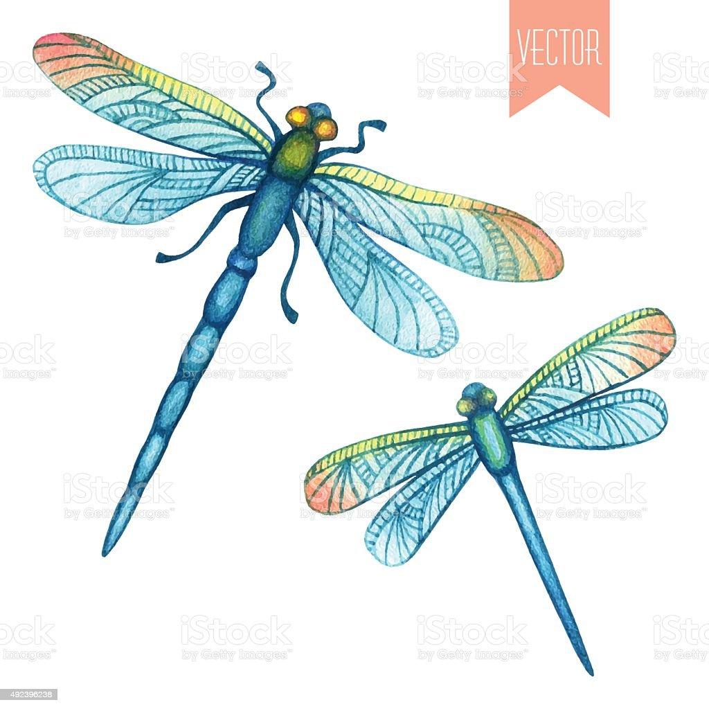 Watercolor set of dragonflies vector art illustration