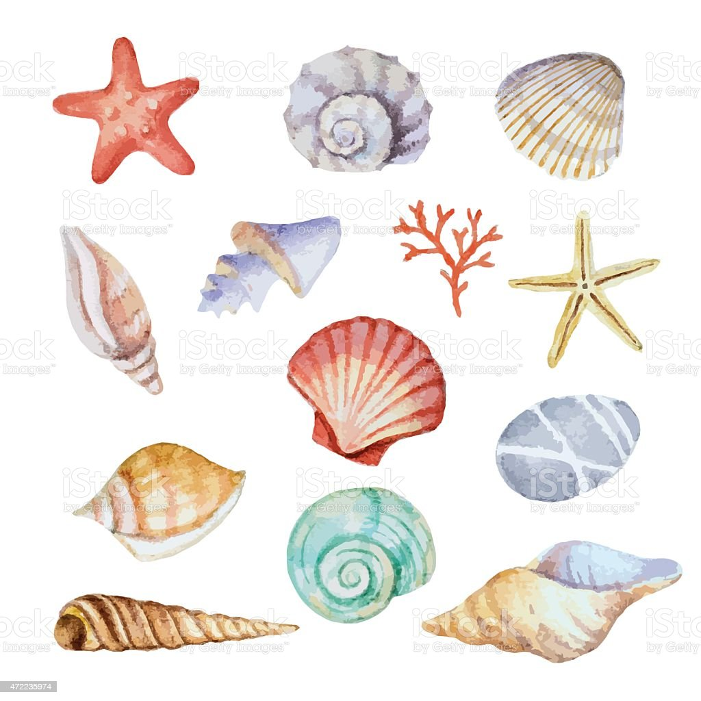 Watercolor set of seashells vector art illustration