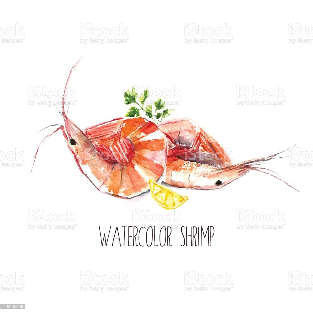 Watercolor shrimps. vector art illustration