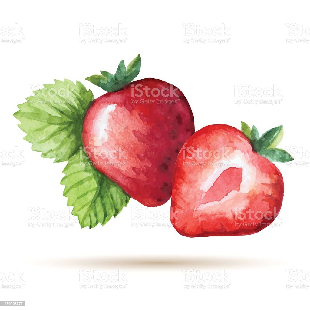 Watercolor strawberry vector art illustration