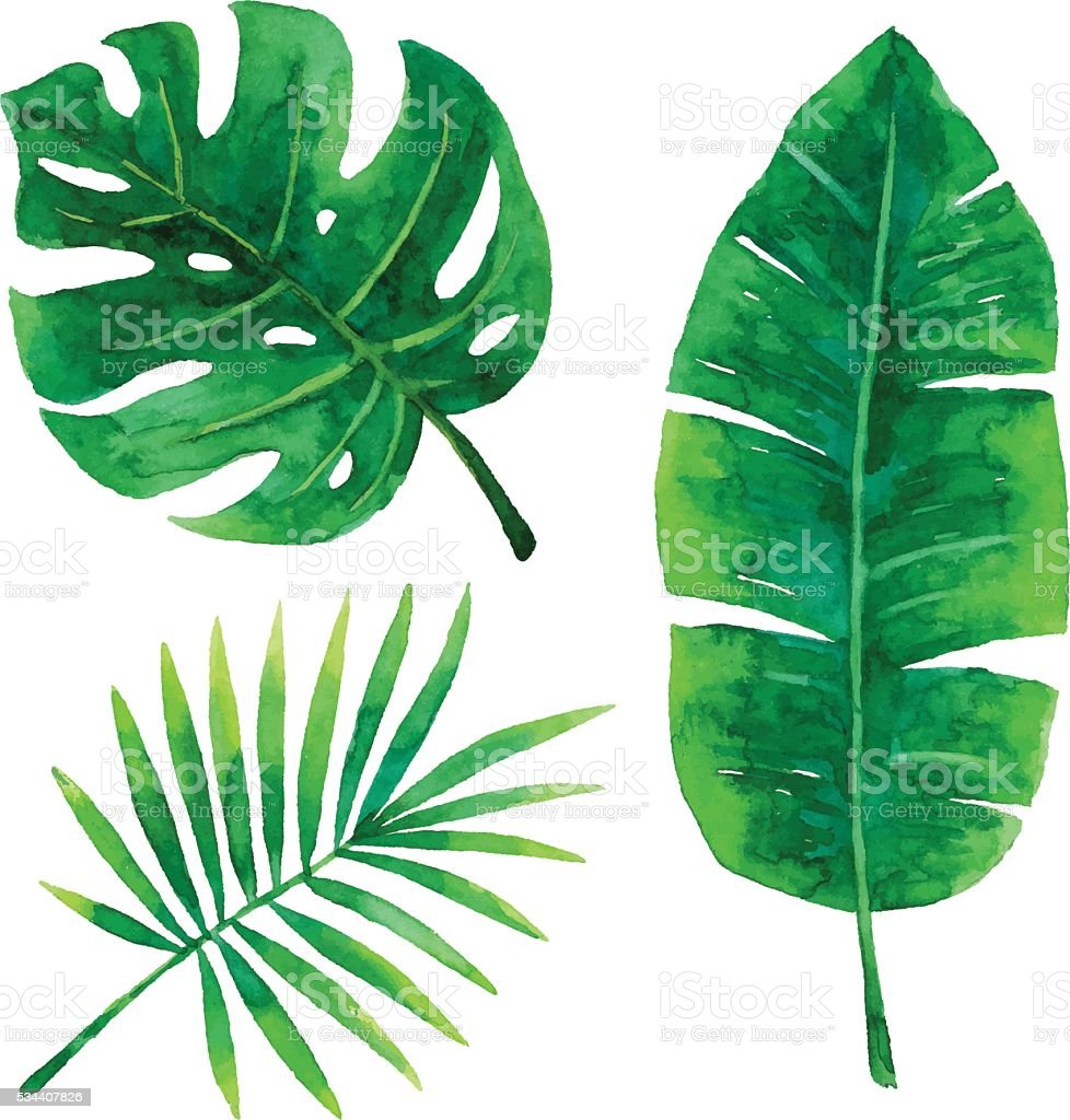 Watercolor Tropical Leaves vector art illustration