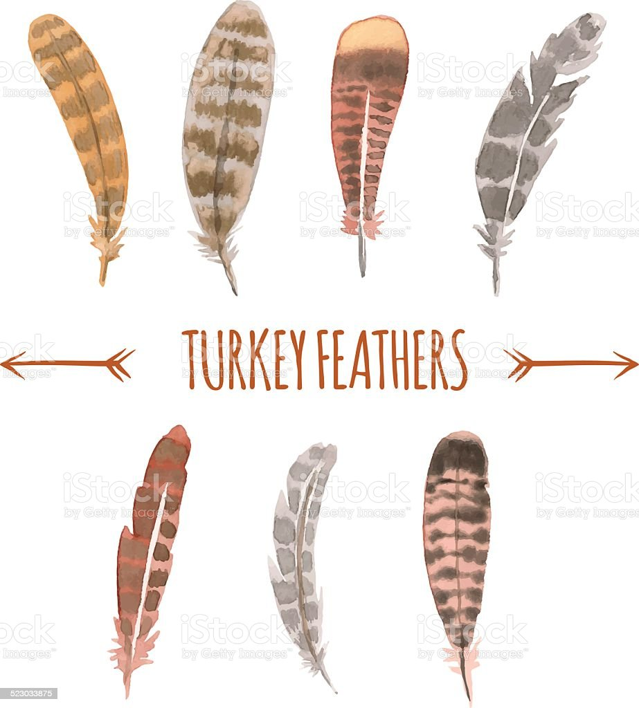 Watercolor Tturkey Feathers. vector art illustration