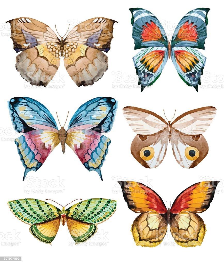 Watercolor vector butterflies vector art illustration