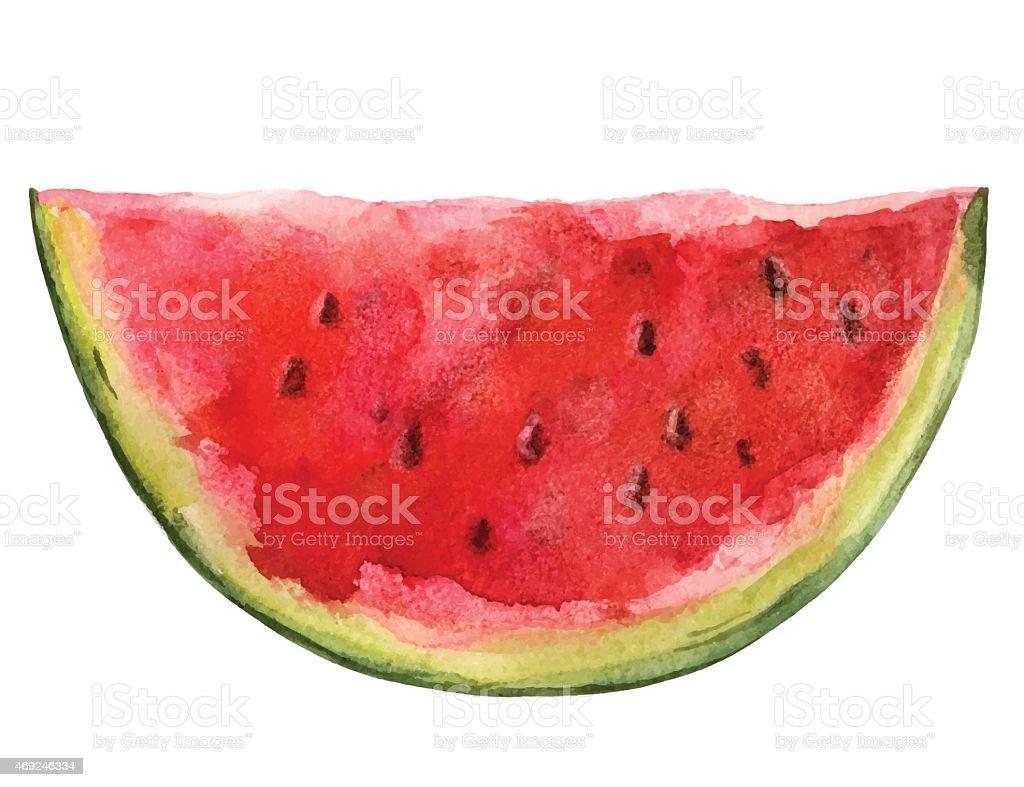 Watercolor watermelon slice closeup isolated vector art illustration