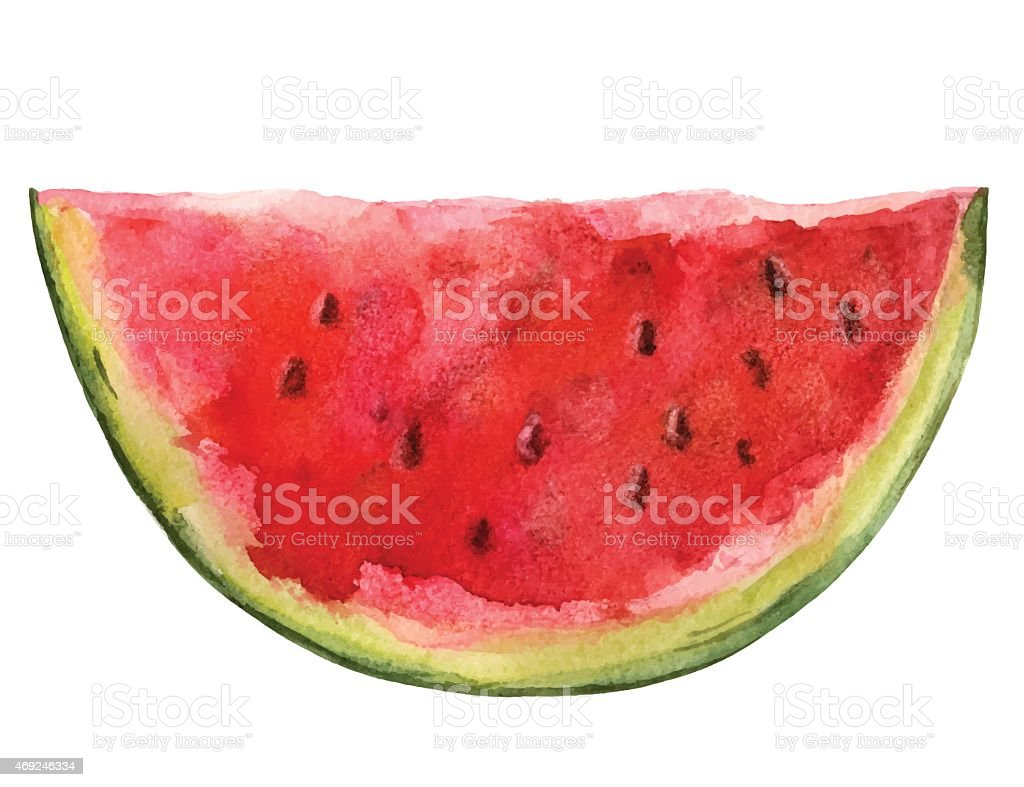 Watercolor watermelon slice closeup isolated vector art illustration