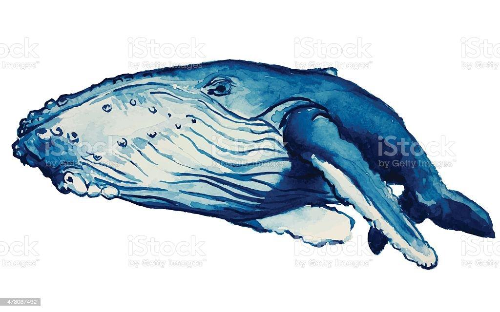 Watercolor Whale vector art illustration