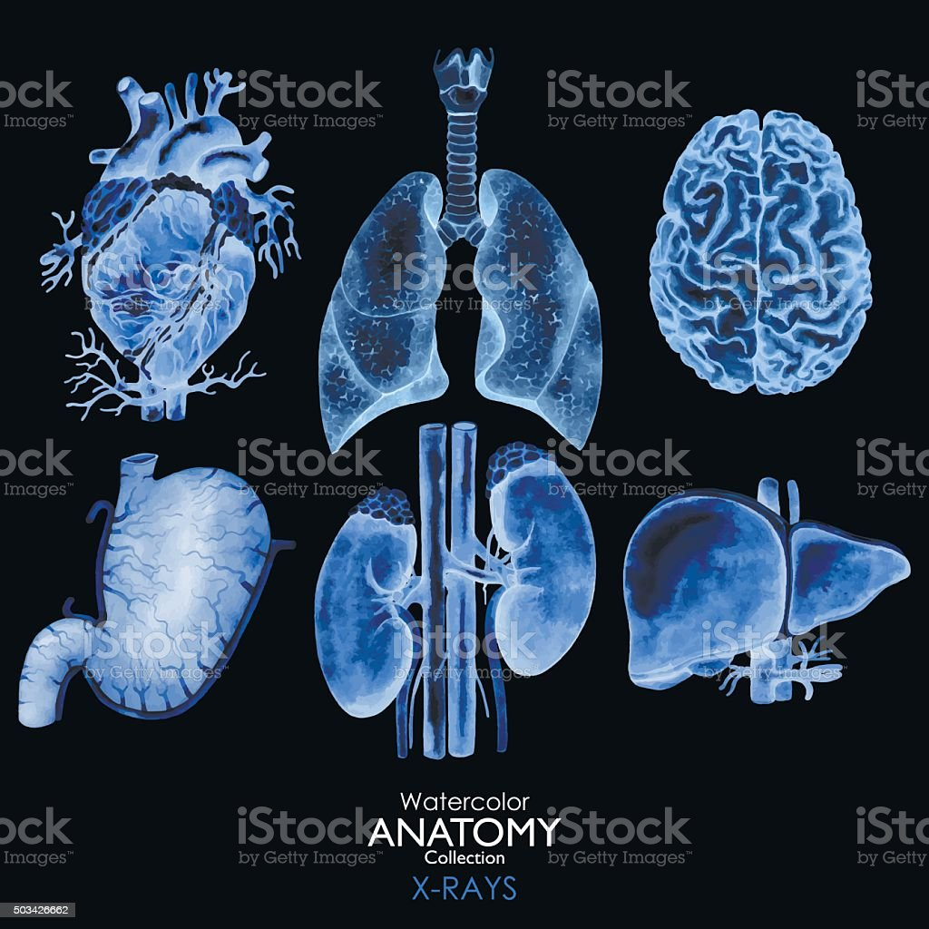 Watercolor X-rays of organs vector art illustration