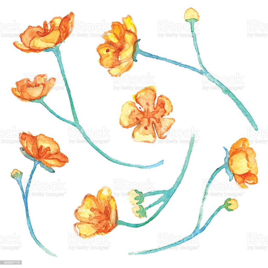 Watercolor yellow buttercup flowers isolated vector set vector art illustration