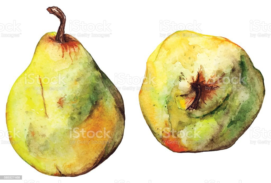 Watercolor yellow green pear ripe fruit isolated vector vector art illustration