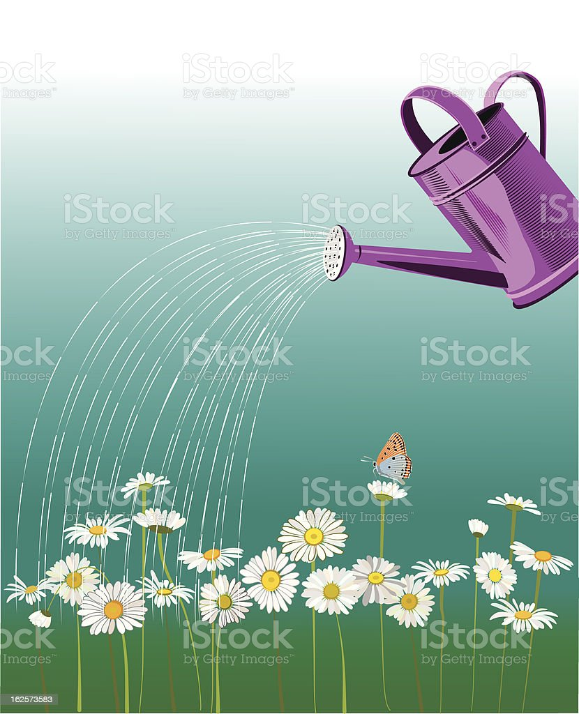 watering daisies royalty-free stock vector art