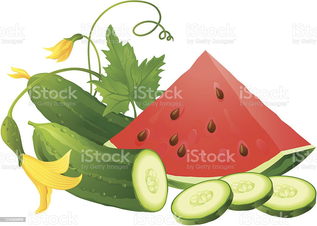 Watermelon and Cucumber royalty-free stock vector art
