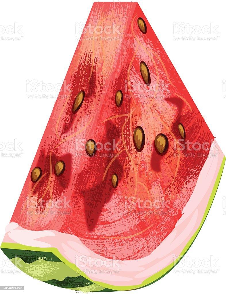 Watermelon Fruit vector art illustration