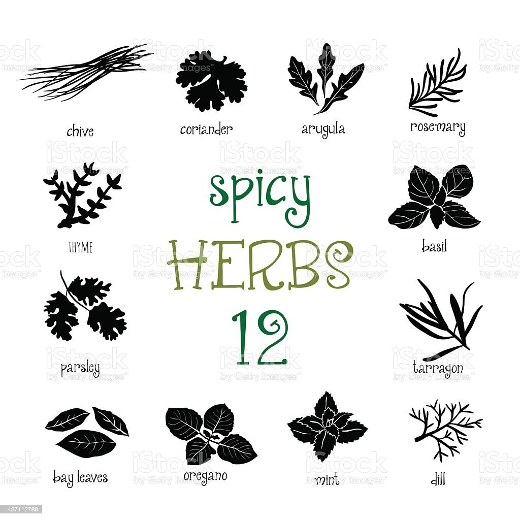 Web icon set of different spicy herbs vector art illustration
