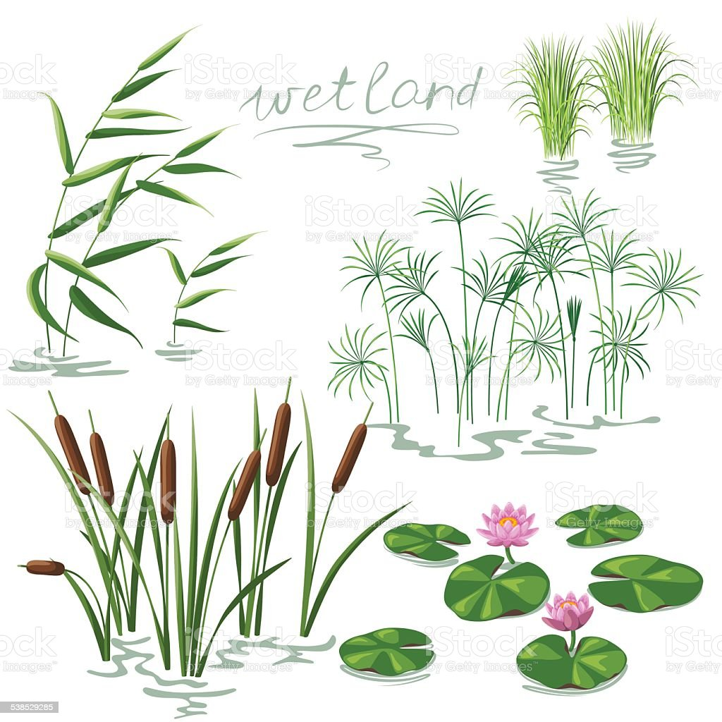 Wetland Plants Set vector art illustration