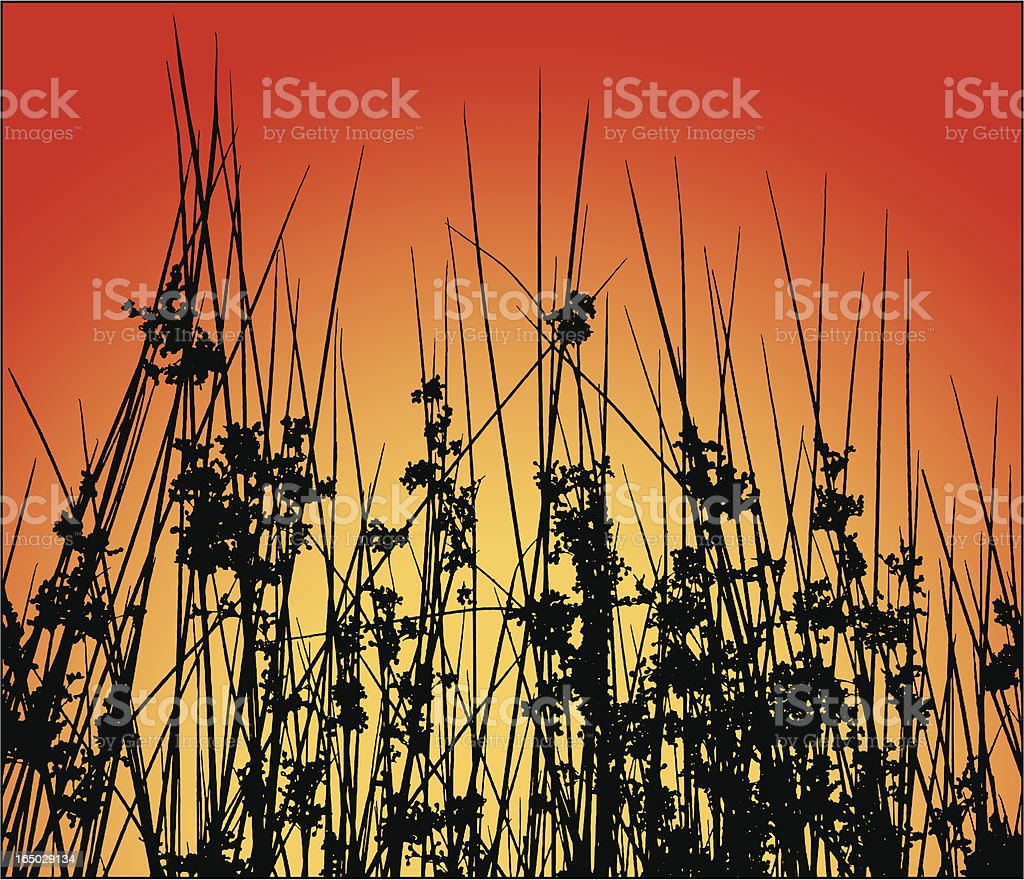 Wetland plants silhouette royalty-free stock vector art
