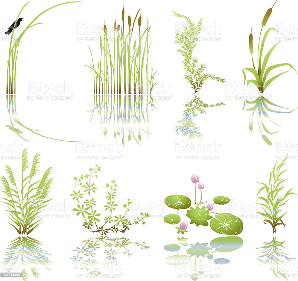Wetlands Icons with Multiple Marsh Elements including their Shadows vector art illustration