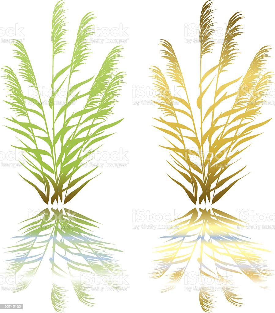Wetlands Plant royalty-free stock vector art