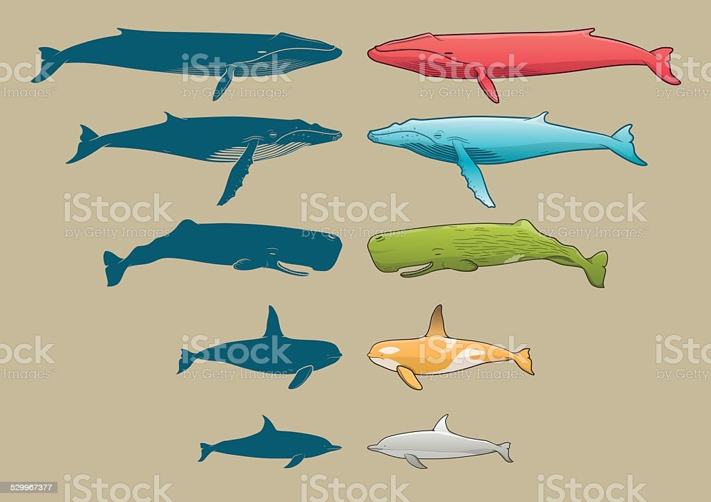 Whale and Dolphin set vector art illustration