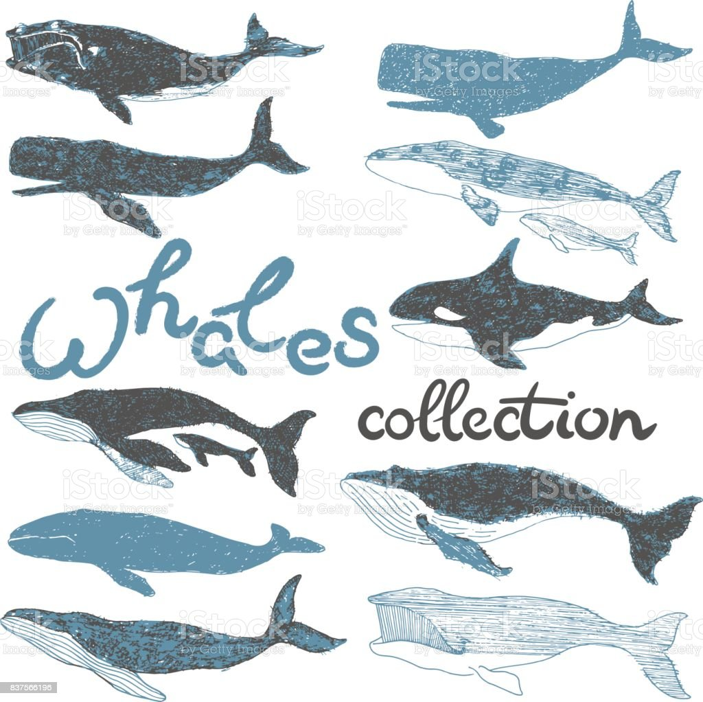 whales ocean collection graphic art illustration set vector art illustration