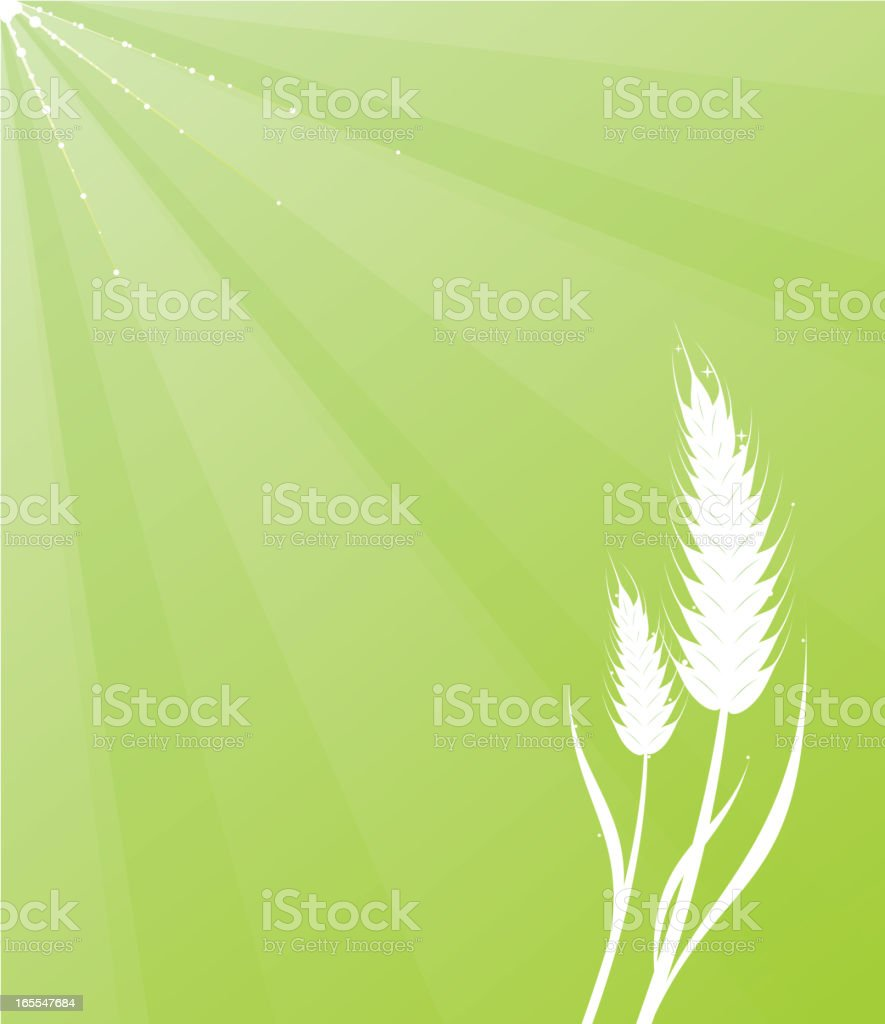 wheat background royalty-free stock vector art