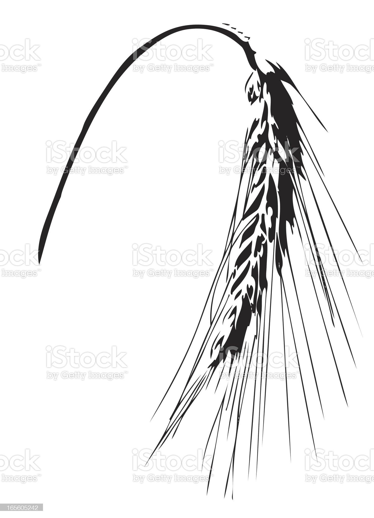 wheat ear illustration royalty-free stock vector art