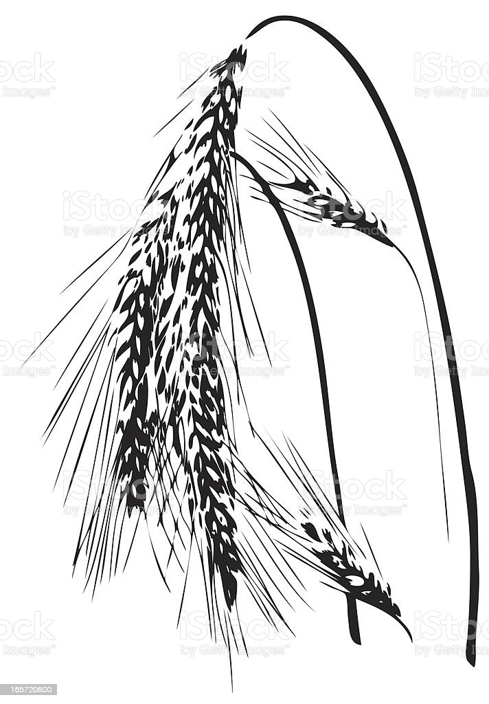 Wheat ear illustration royalty-free stock vector art