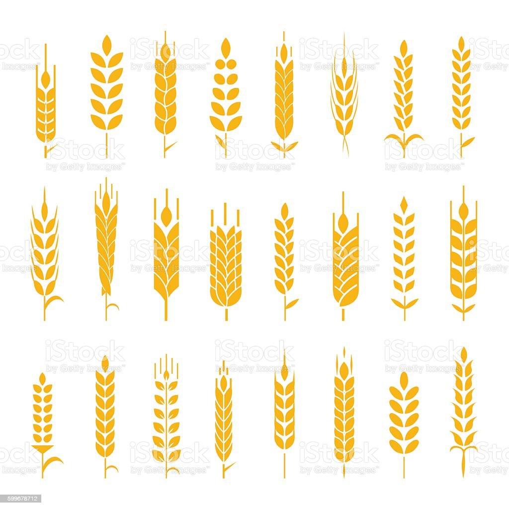 Wheat ear symbols for logo design. vector art illustration