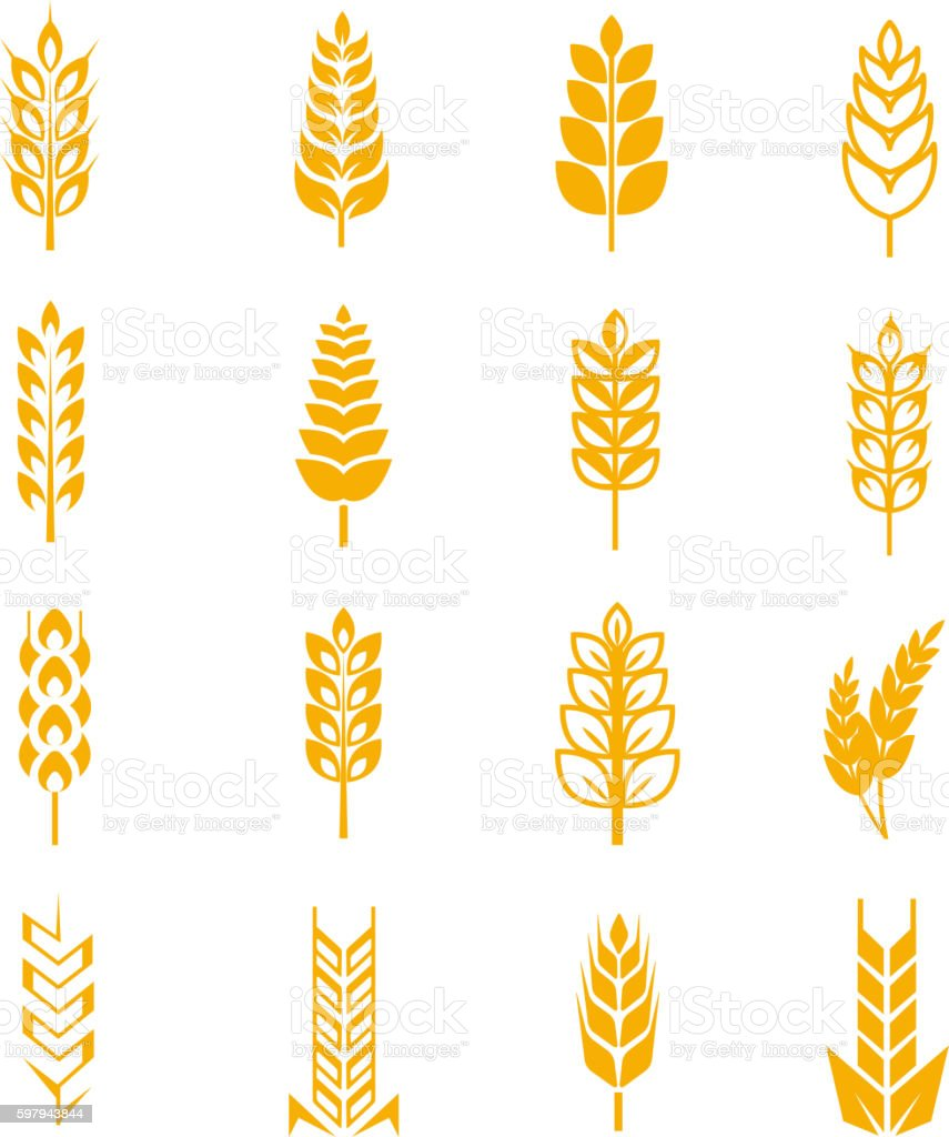 Wheat ears bread vector symbols vector art illustration