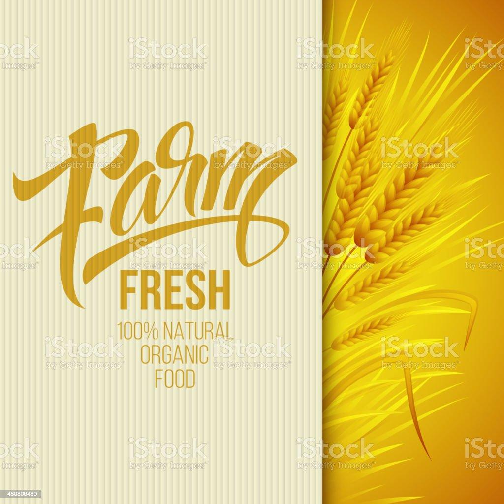 Wheat ears icon. Ears of Wheat. . Vector illustration vector art illustration