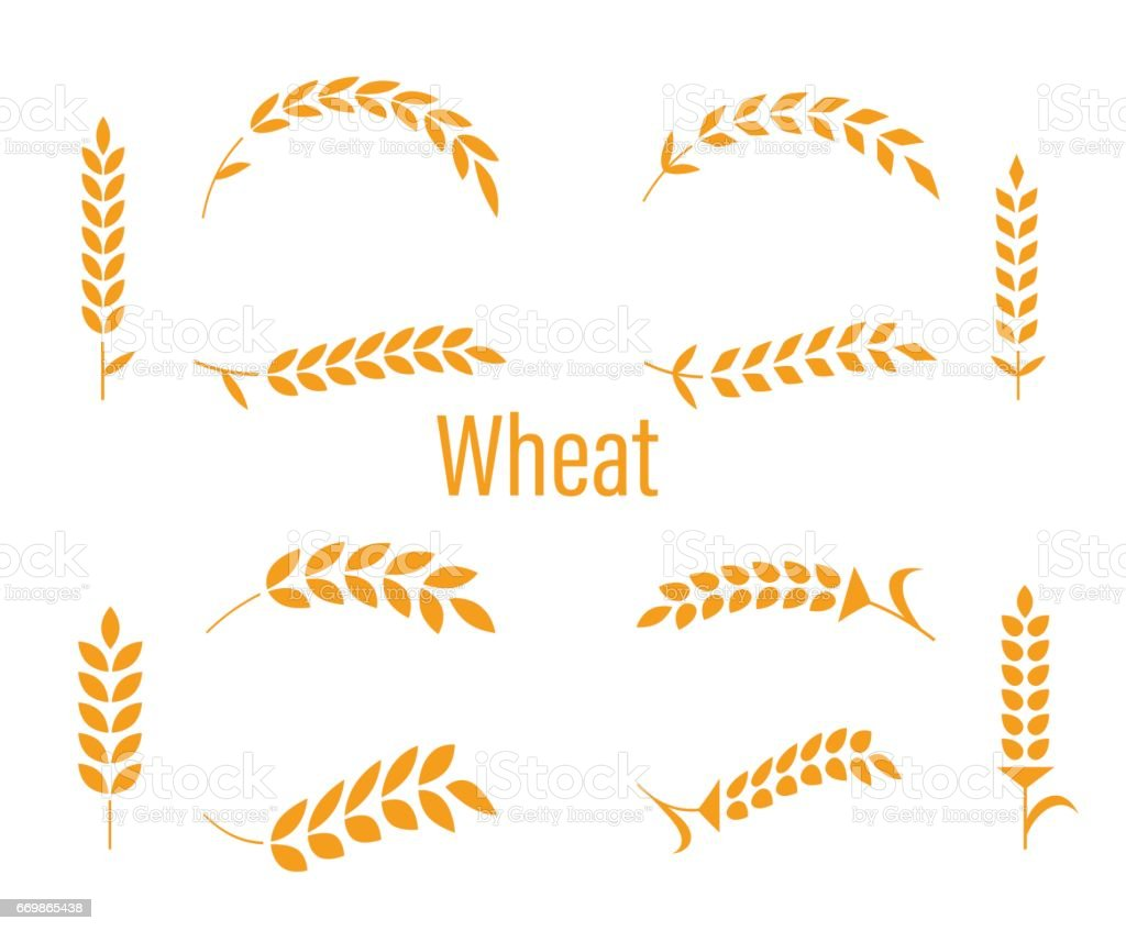 Wheat ears or rice icons set. Agricultural symbols isolated on white background. Design elements for bread packaging or beer label. Vector illustration. vector art illustration