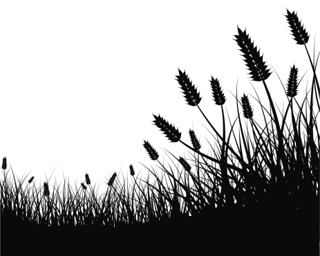 Field Of Wheat Clipart
